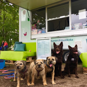 Hundar utanför glasskiosk.