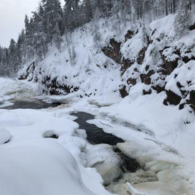 Jäinen Kiutaköngäs Oulangan kansallispuistossa