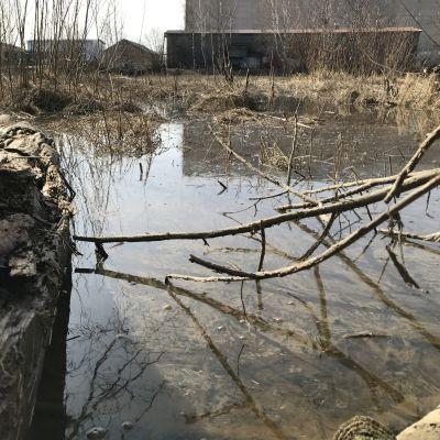 Öljyä Kokemäenjoen pinnalla