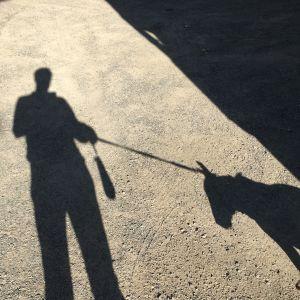 Skugga av människa och hund
