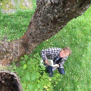 Claes Olsson under äppelträdet