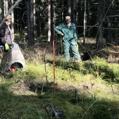 Kaksi miestä metsässä levittämässä uudenlaista metsälannoitetta