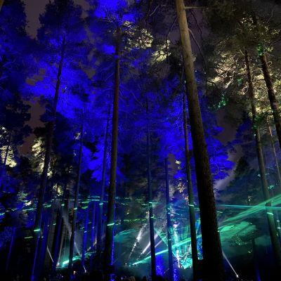 Valoja ja varjoja Ahveniston metsässä Sibelius-Fantasiassa