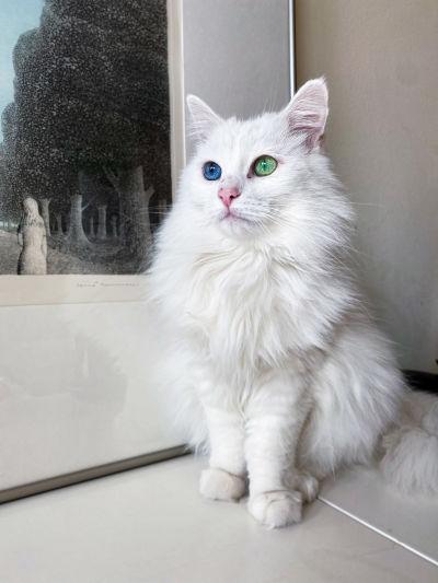 Pulja-kissa Moskovassa.