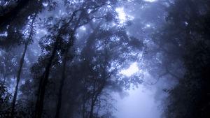 Sademetsä