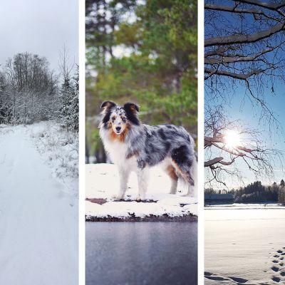 Collage på läsarnas vinterbilder.