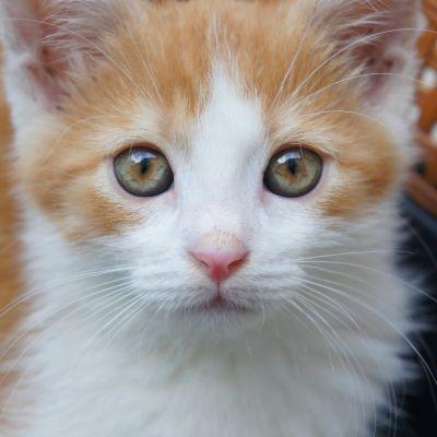 Porträttbild på kattunge.