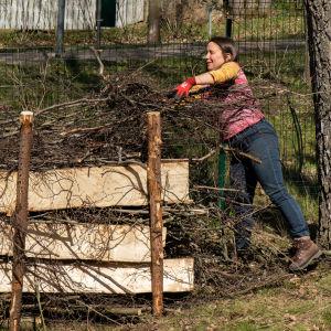 Minna Pyykkö kantaa oksia lahopuuaitaan