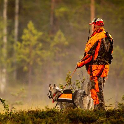 Jägare klädd i orange och kamouflerat står med hund iförd reflexväst med ryggen mot kameran i skogen.