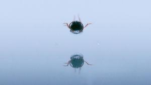 Halavasepikkä. Kuva Henrik Håkanssonin taide-elokuvasta The Beetle.