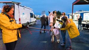 Toivon yön työryhmä äänittää mikki kiinni hevosen turvassa.