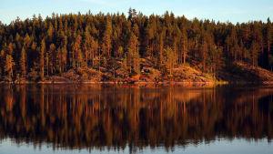 Kesäinen ilta taittuu kultaan Koloveden kansallispuistossa.