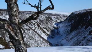 Kevon kanjoni on kotoinen Grand Canoynimme. Mahtavassa kanjonissa vallitsee oma pienilmastonsa.