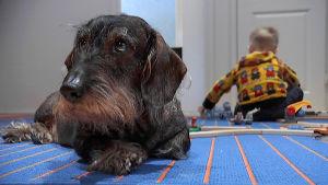 Koira ja lapsi lattialla.