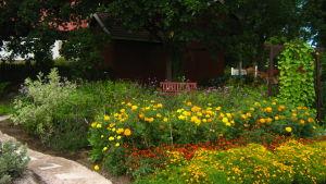 Trädgård med gula blommor.