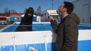 Ingo Stiebner lockar sjölejonet Lappi att prata. De är med på Sirkus Finlandia 2015.