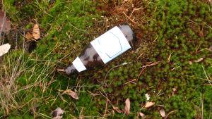 flaska i gräs