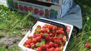 jordgubbar i en låda