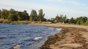 Det är inte längre någon självklarhet att man ska kunna simma i Östersjön. Giftiga alger och föroreningar förstör havet. Bild: Yle/Pia Santonen