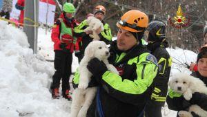 Hundvalpar räddas efter lavin i Abruzzo.