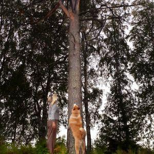 Puu, nainen ja koira.
