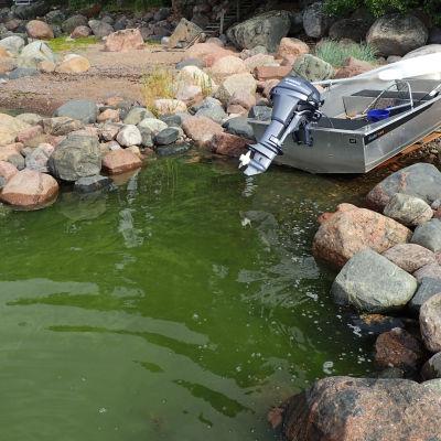 Blågrönalger och motorbåt på en stenig strand