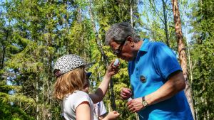 Presidentti Niinistö suorittaa tuoksupurkkitehtävää metsäretkellä.