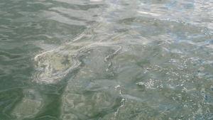 Algblomning i Hitis