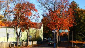 Träd i höstens färger