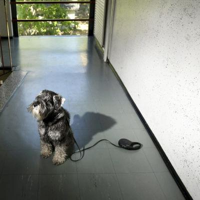 Koira istuu kerrostalon rappukäytävässä.