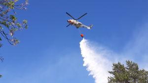 Gränsbevakningens helikopter släpper ut vatten över en skogsbrand.