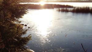 En tunn isskorpa har lagt sig på en sjö, där solen lyser lågt över strandgräset.