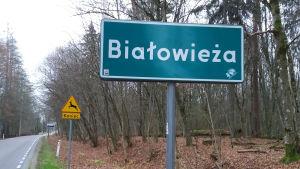 Bialowieza