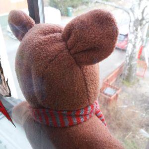 En nalle i ett fönster i Åbo.