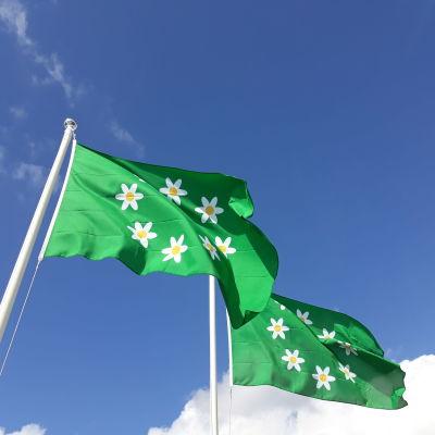 Två gröna flaggor med en ring av vitsippor tryckta i mitten.