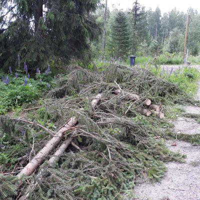 Päivö-myrsky pätkäisi kuusen poikki Liperissä.