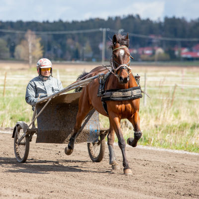 Harri Koivunen ajaa ravihevosella harjoitusradalla.
