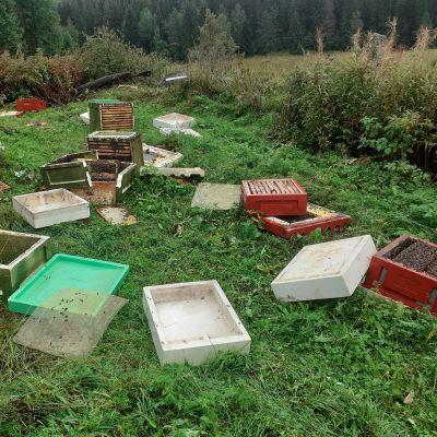 Karhun rikkomia mehiläispesiä sikin sikokin maassa