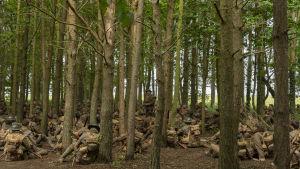 Ett stort gäng soldater vilar under höga träd.