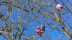 Ballonger har fastnat i ett träd i Brunnsparken.