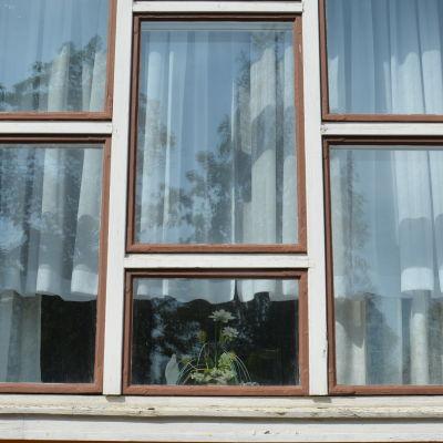 ett fönster och inuti syns en liten blomma i en blomkruka
