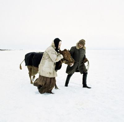 Rose-Marie Rosenback (Maija) och Leif Sundberg (Janne) går över isen med en ko