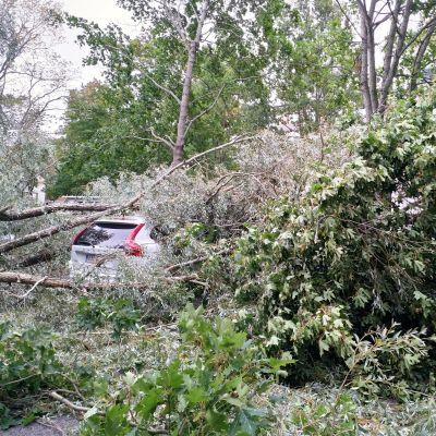 Auto jäänyt Vaasassa puun alle, Aila-myrsky 17.9.20