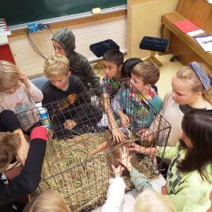 En grupp med barn står runt en kaninbur.