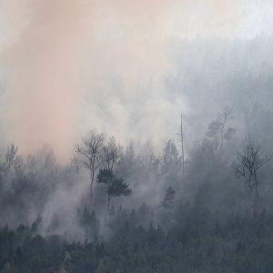 Savuava metsä metsäpalon jälkeen Siperiassa