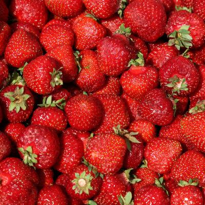 Suuri määrä mansikoita.