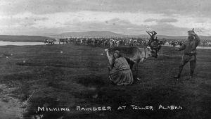 Saamelaiset opettivat poronhoitoa Alaskan alkuperäiskansoille