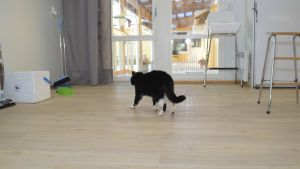 Katten Pedro bor på Kårkulla samkommuns boende i Österby i Ekenäs.