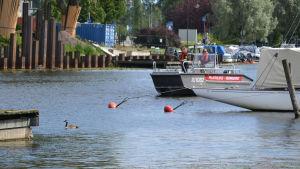 Kanadagås i ån, räddningsverkets båt intill.