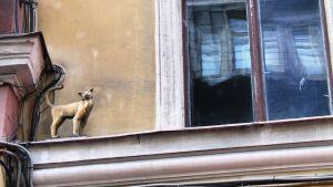 Kissa seinällä Pietarissa